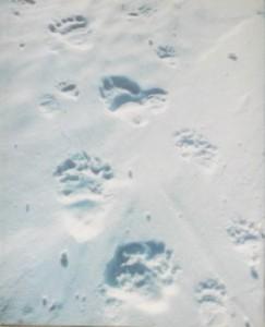 следы животного белый медведь