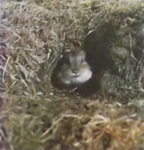 евражка и ворон.эскимосская сказка
