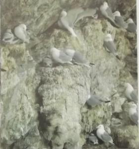 чайка на Чукотке