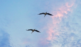 птицы улетают.Вальгиргин